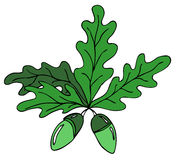 Oak leafs. Hand drawn color oak leafs Royalty Free Stock Photo