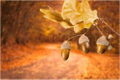 Oak leafs Royalty Free Stock Photos