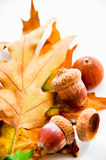 Oak leafs carpet with acorns Stock Photography