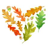 Autumn oak leaves and acorns in a heart shape vector illustration