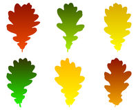 Oak leaves Royalty Free Stock Photo
