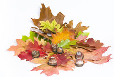 Oak leaves and acorns Stock Photo