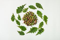 Oak leaves and acorns form circle royalty free stock photos