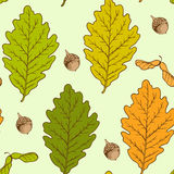 Oak leaves and acorns Stock Images