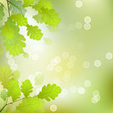 Oak Leaves Background. Vector Leaves on the Branches in front of a Blurred Background with Bokeh Stock Images