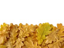 Oak leaves border Royalty Free Stock Photo