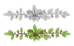 Oak Leaves Branch vector Royalty Free Stock Images