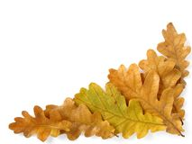 Oak leaves corner Stock Photography