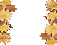 Oak leaves on either side of the image Stock Photography