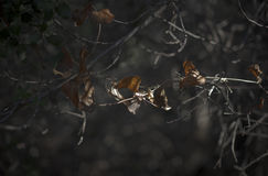 Oak leaves in Evening Light Stock Images