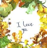Oak leaves flat lay royalty free stock photos