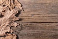 Oak Leaves. A group of oak leaves on wooden desk Royalty Free Stock Image