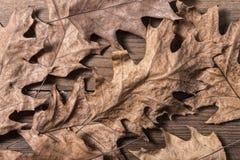 Oak Leaves. A group of oak leaves on wooden desk Stock Image
