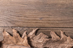 Oak Leaves. A group of oak leaves on wooden desk Royalty Free Stock Photography