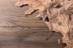 Oak Leaves. A group of oak leaves on wooden desk Royalty Free Stock Photos