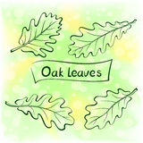 Oak Leaves, Pictogram Set Stock Photos