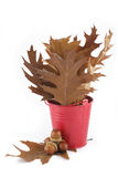 Oak leaves in a red bucket and acorns Stock Photo