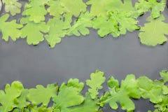 Oak leaves in water Royalty Free Stock Image
