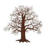 Oak without leaves on a white background Royalty Free Stock Photography