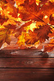 Oak leaves on wood Stock Photography
