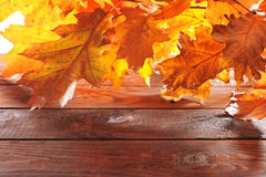 Oak leaves on wood Royalty Free Stock Photography