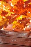 Oak leaves on wood Stock Photos