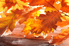 Oak leaves on wood Royalty Free Stock Photos
