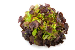Oak lettuce Royalty Free Stock Photos