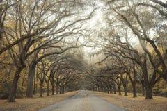 The oak-lined driveway in Savannah, Georgia stock photos