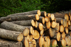 Oak log Royalty Free Stock Photography