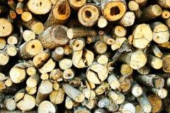 Oak log. Stack of thin oak log Stock Image