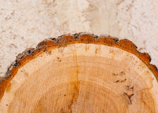 Oak log with brown bark Royalty Free Stock Images