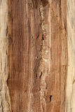 Oak log core. Half cut as background Stock Photo