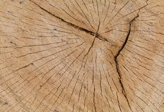 Oak Log Cross Section with Cracks. Partial cross section of old oak log Stock Photos