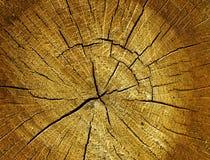 Oak log surface Stock Image