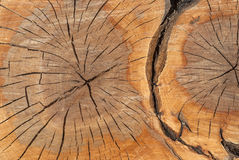 Oak log surface as background. Oak log surface with cracks as background stock image