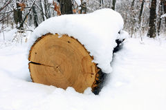 Oak log under snow Royalty Free Stock Photography