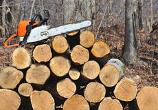 Chainsaw and Oak Logs Royalty Free Stock Photo