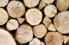 Oak logs cutted and stacked Stock Photos