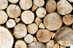 Oak logs cutted and stacked Royalty Free Stock Photography