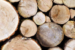 Oak logs cutted and stacked Royalty Free Stock Image