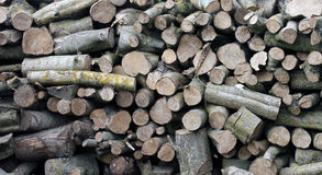 Oak logs piled up. Dry Oak wood logs stacked in a pile Stock Image