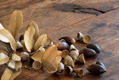 Oak Lumber and Acorns Royalty Free Stock Images