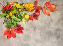 Oak maple autumn leaves background. Oak and maple autumn leaves on grungy stone background Stock Photo