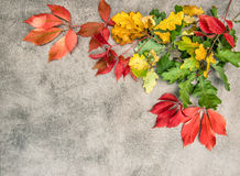 Oak maple autumn leaves stone background. Oak and maple autumn leaves on grungy stone background Stock Photography
