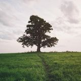 Oak and maple grow together on green field in sunset. Light Royalty Free Stock Photo