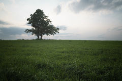 Oak and maple grow together on green field. Tranquil scene Stock Photos