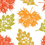 Oak and maple leaves background Stock Images