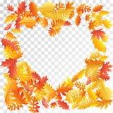 Oak, maple, wild ash rowan leaves vector, autumn foliage on transparent background stock photography