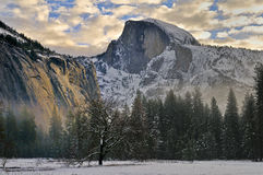 Oak and Morning clouds in Yosemite Valley,  Yosemite National Park Stock Photography